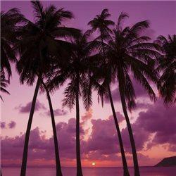 Palm Beach 2-Docht 411g