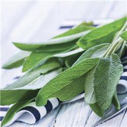 Sage & Celery 2-Docht 411g