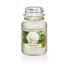 Camellia Blossom 623g